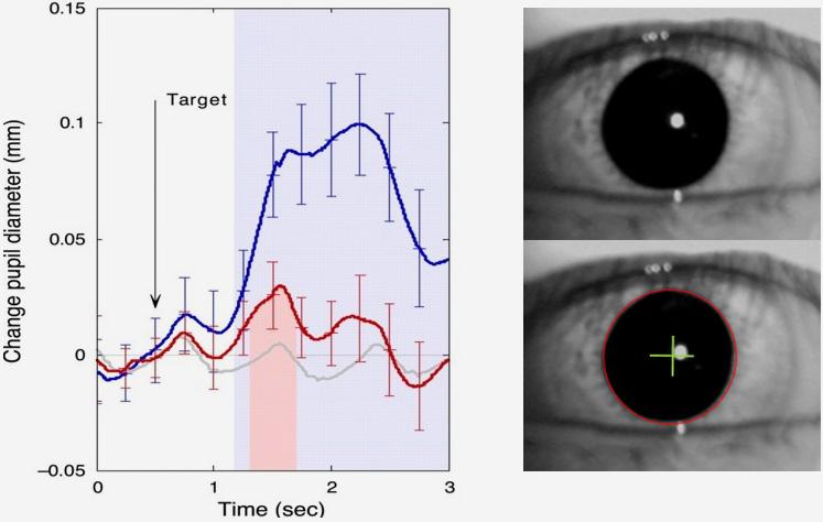 눈동자 크기 Pupil Diameter