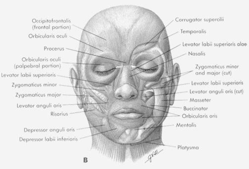 표정 Facial Expression